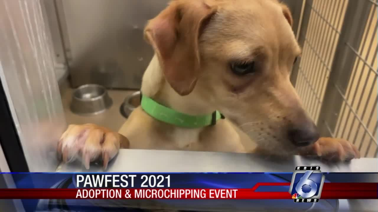 'Pawfest' offers pet adoptions and free microchipping