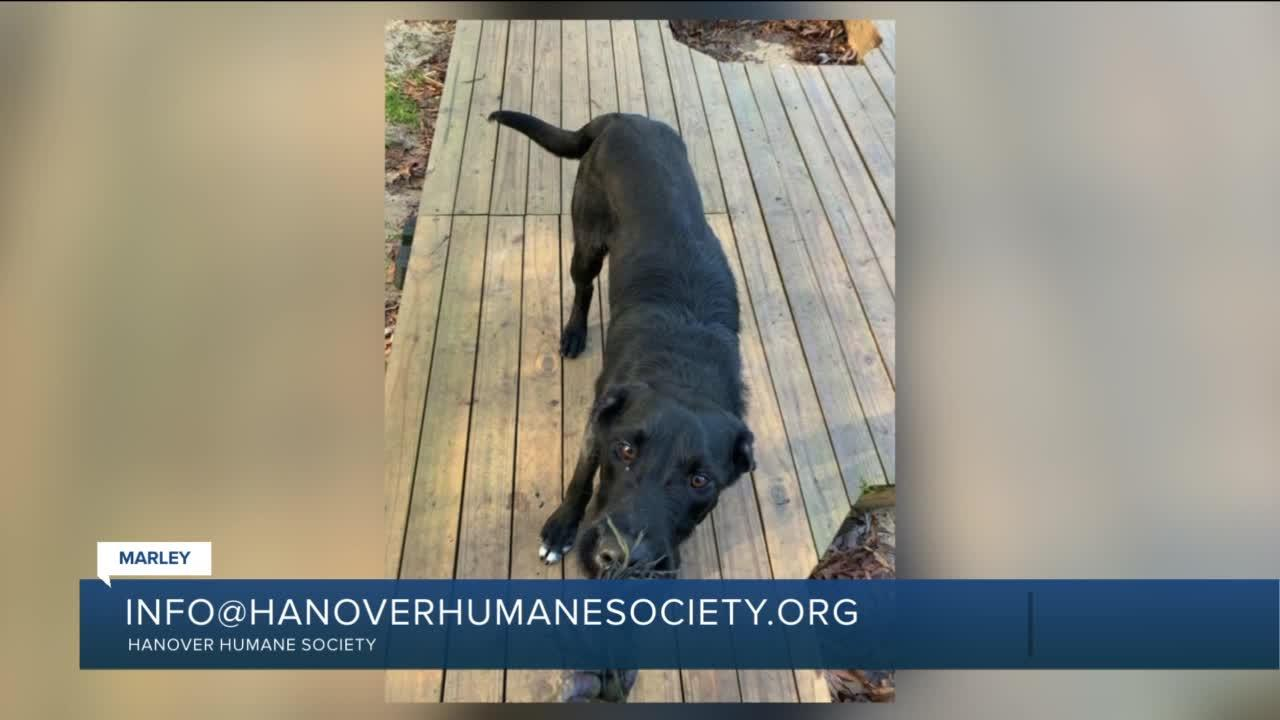 Paws for Pets: Marley (very smart, energetic, playful guy)