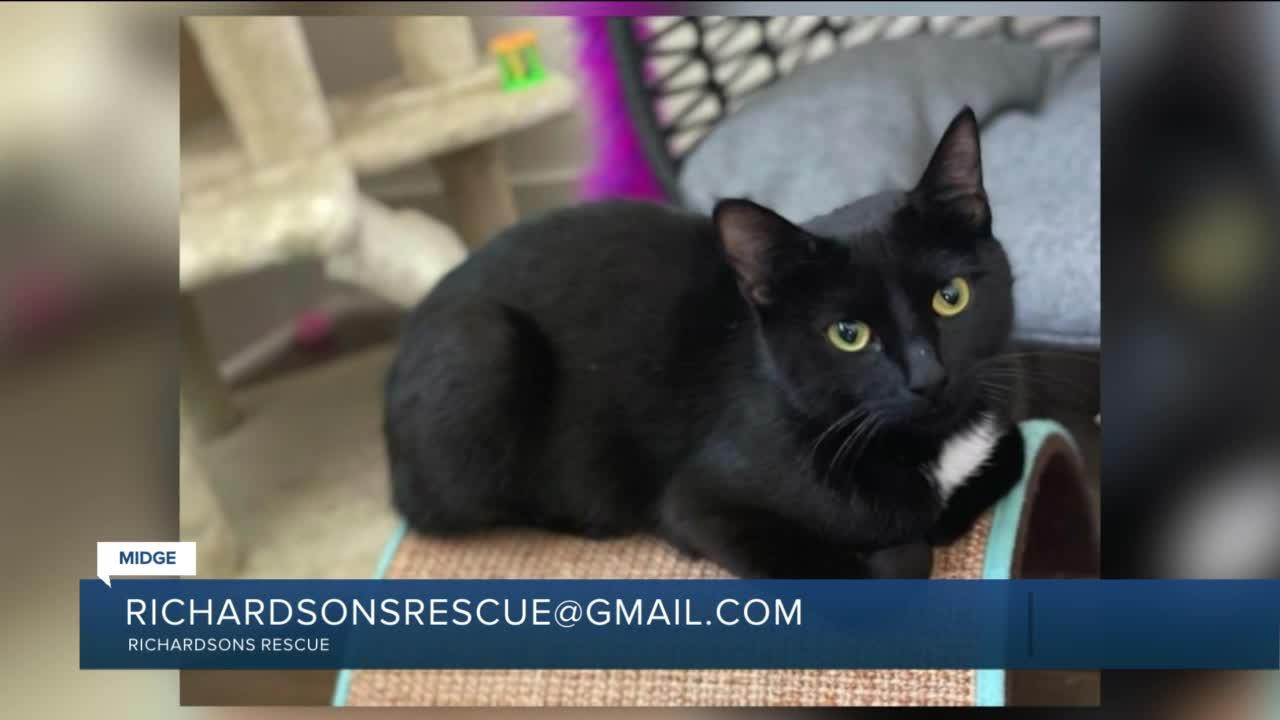 Paws for Pets: Midge (very sweet & playful girl)