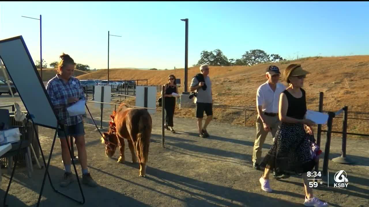Sensorio gives back to local rescue animals