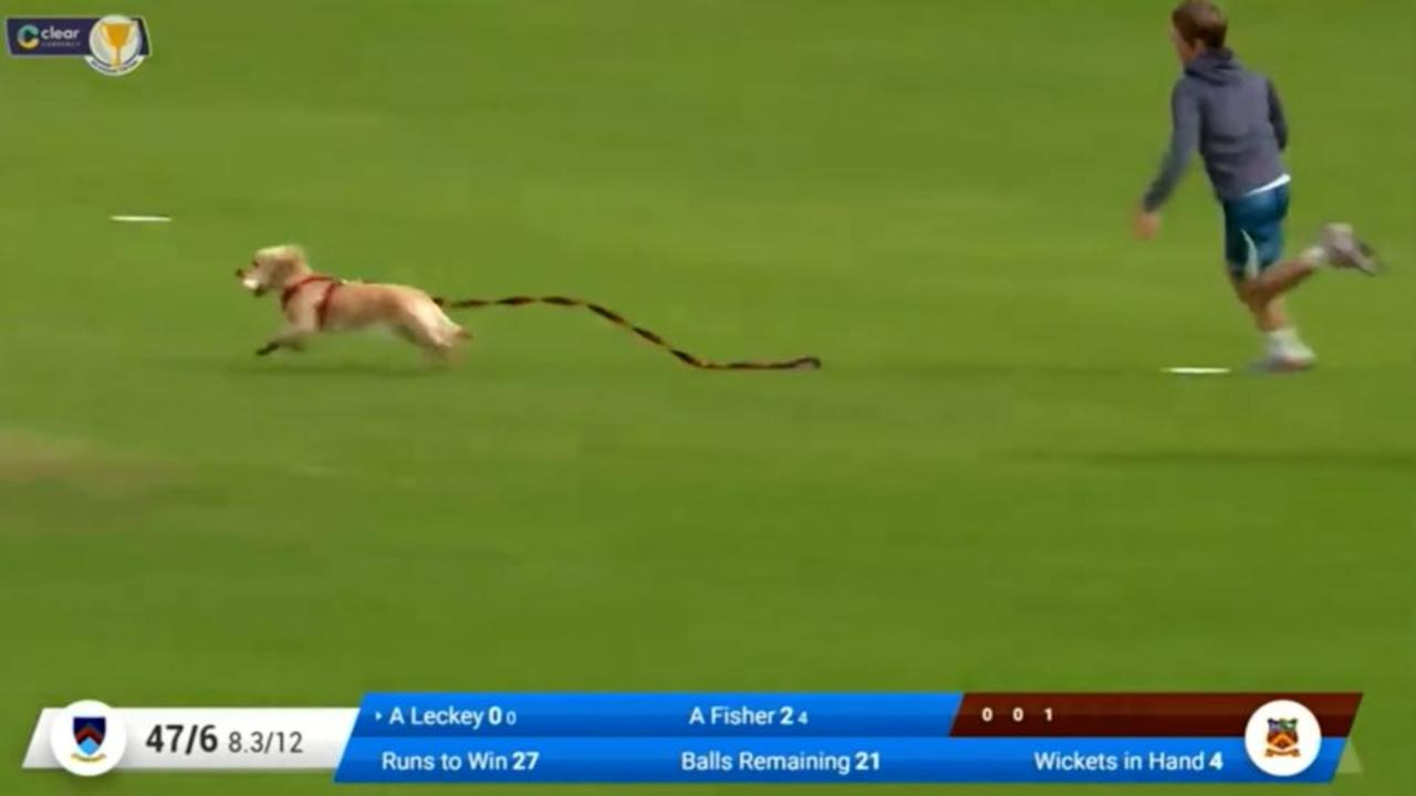 Dog steals ball in funny moment during cricket match