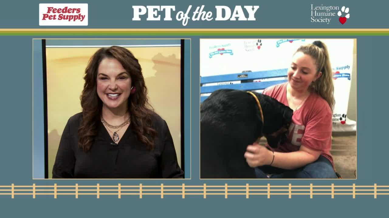 Pet of the Day: Larry