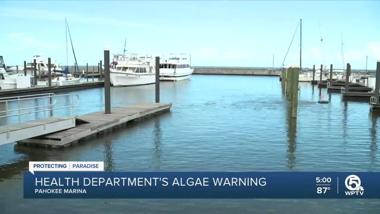 New technology working to alleviate algae problems at Pahokee Marina