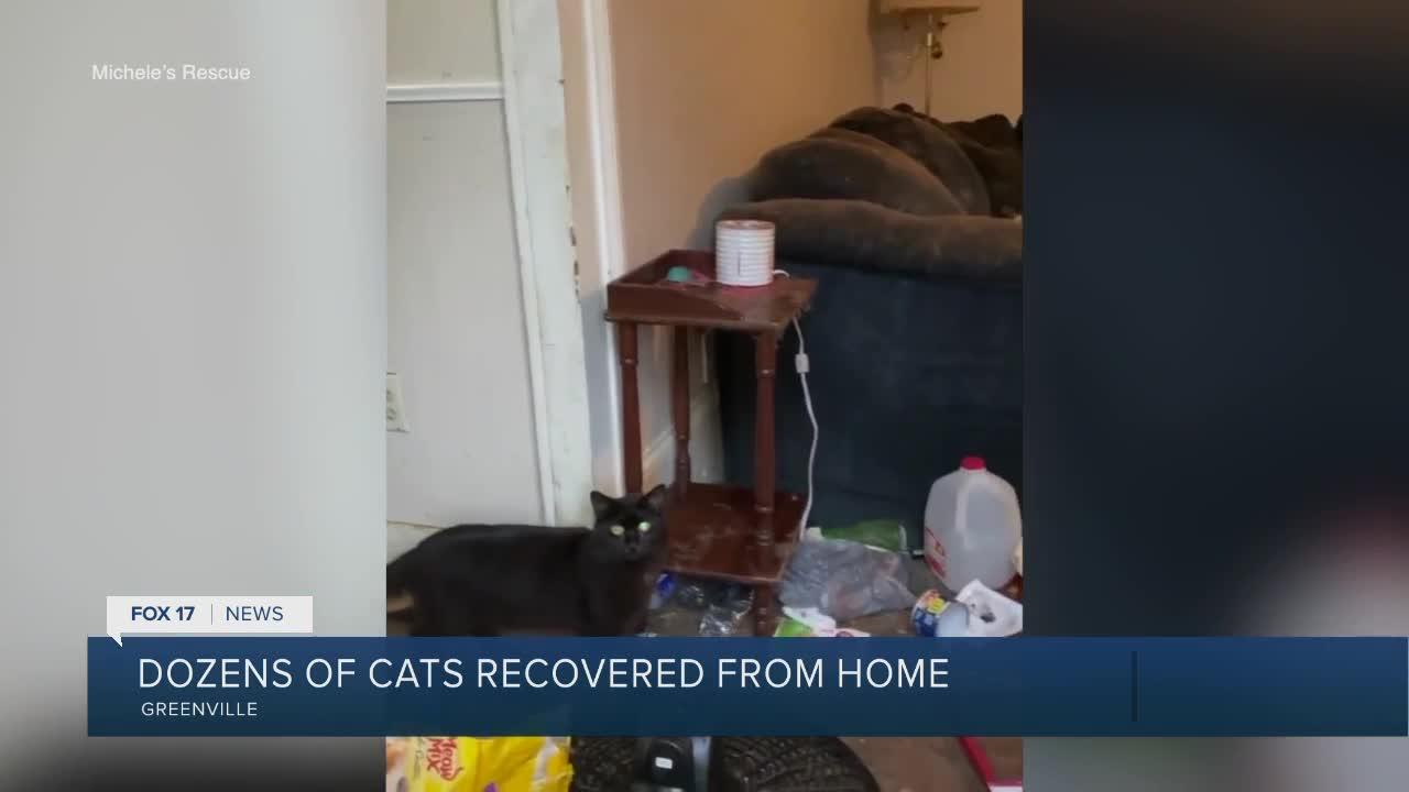 Dozens of cats recovered from home