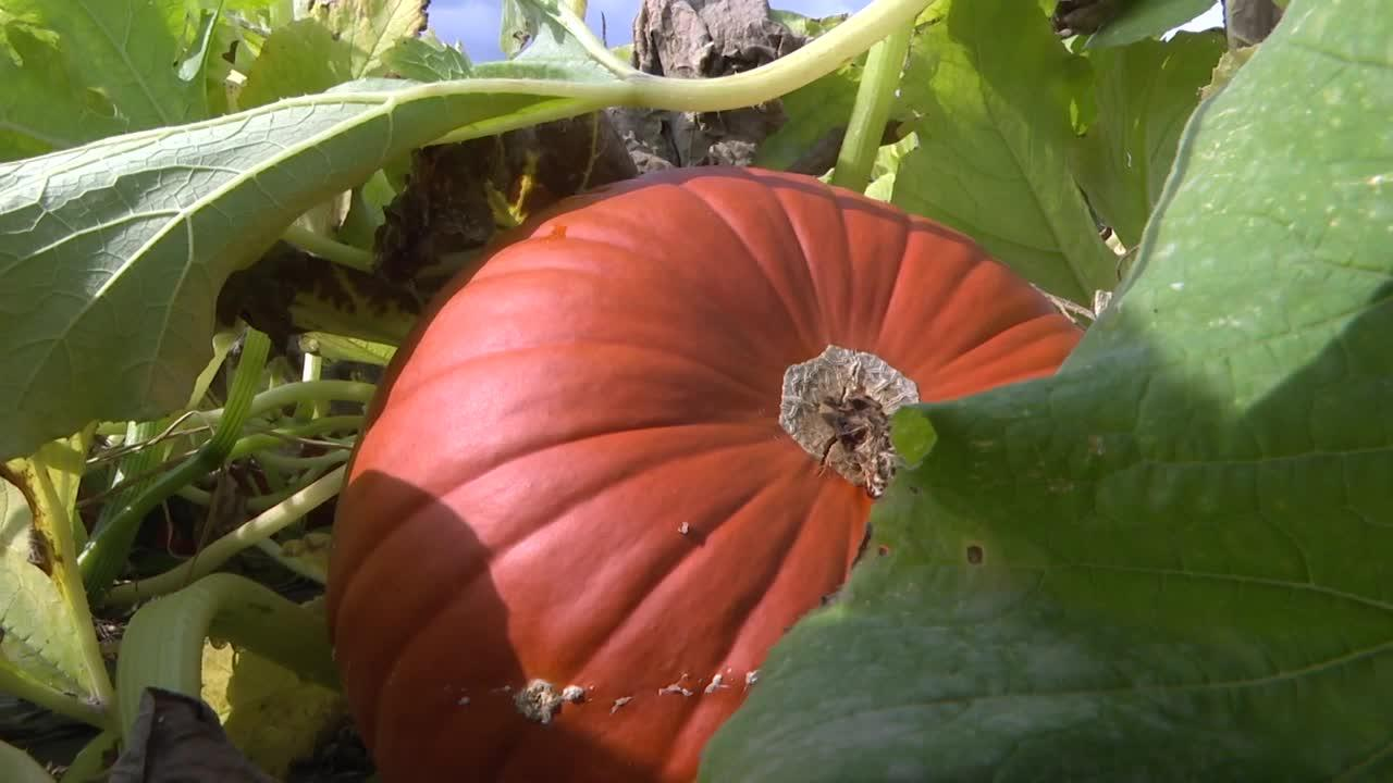 Turner Farms welcomes fall season starting October 1