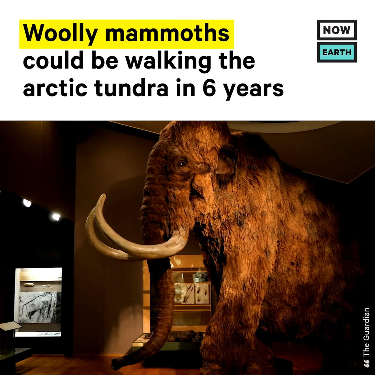 Firm Raises $15M to Bring Back Wooly Mammoth from Extinction