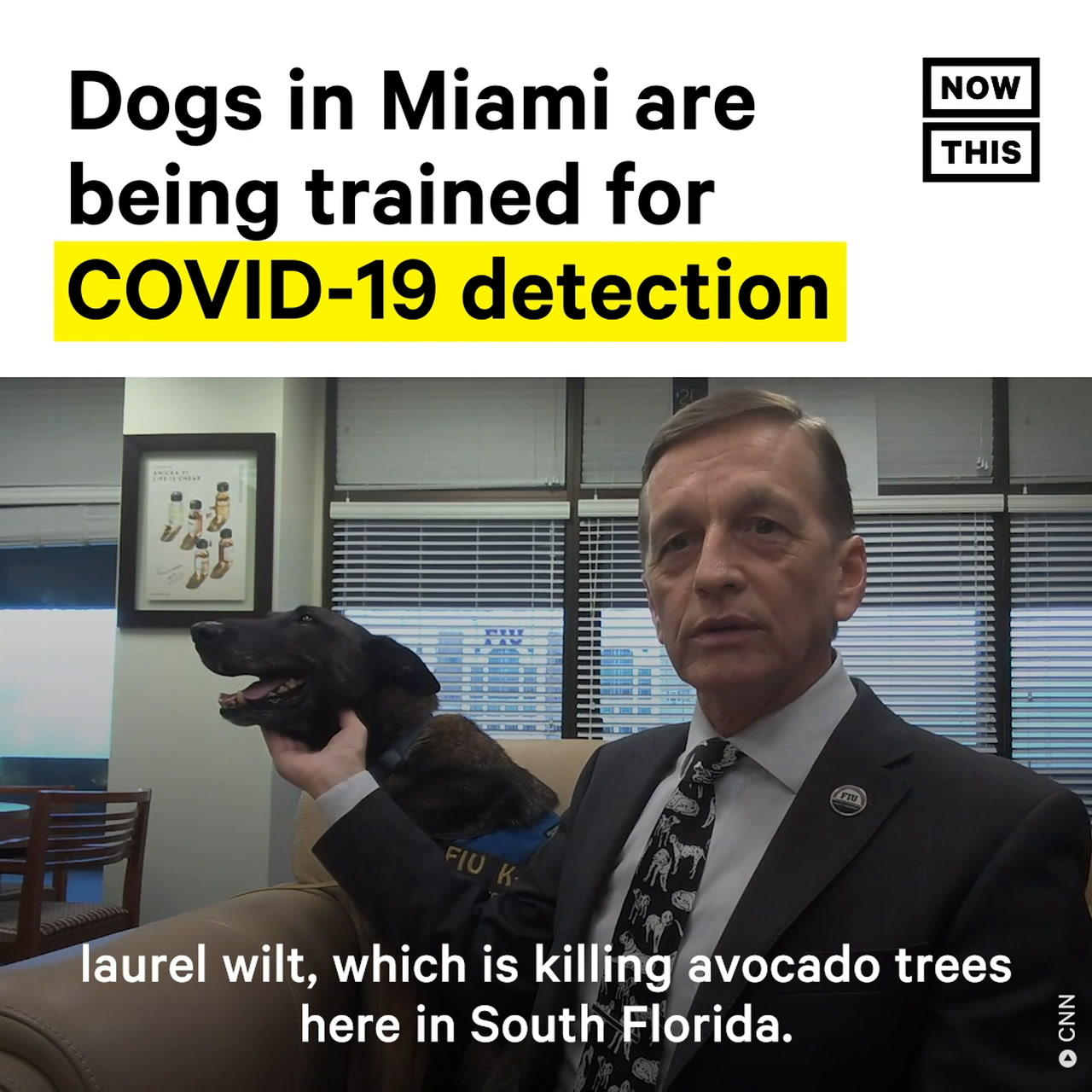 Dogs in Miami are Being Trained to Detect COVID-19