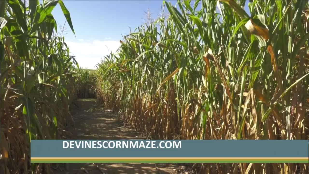 Congrats to Devine's Corn Maze & Pumpkin Patch