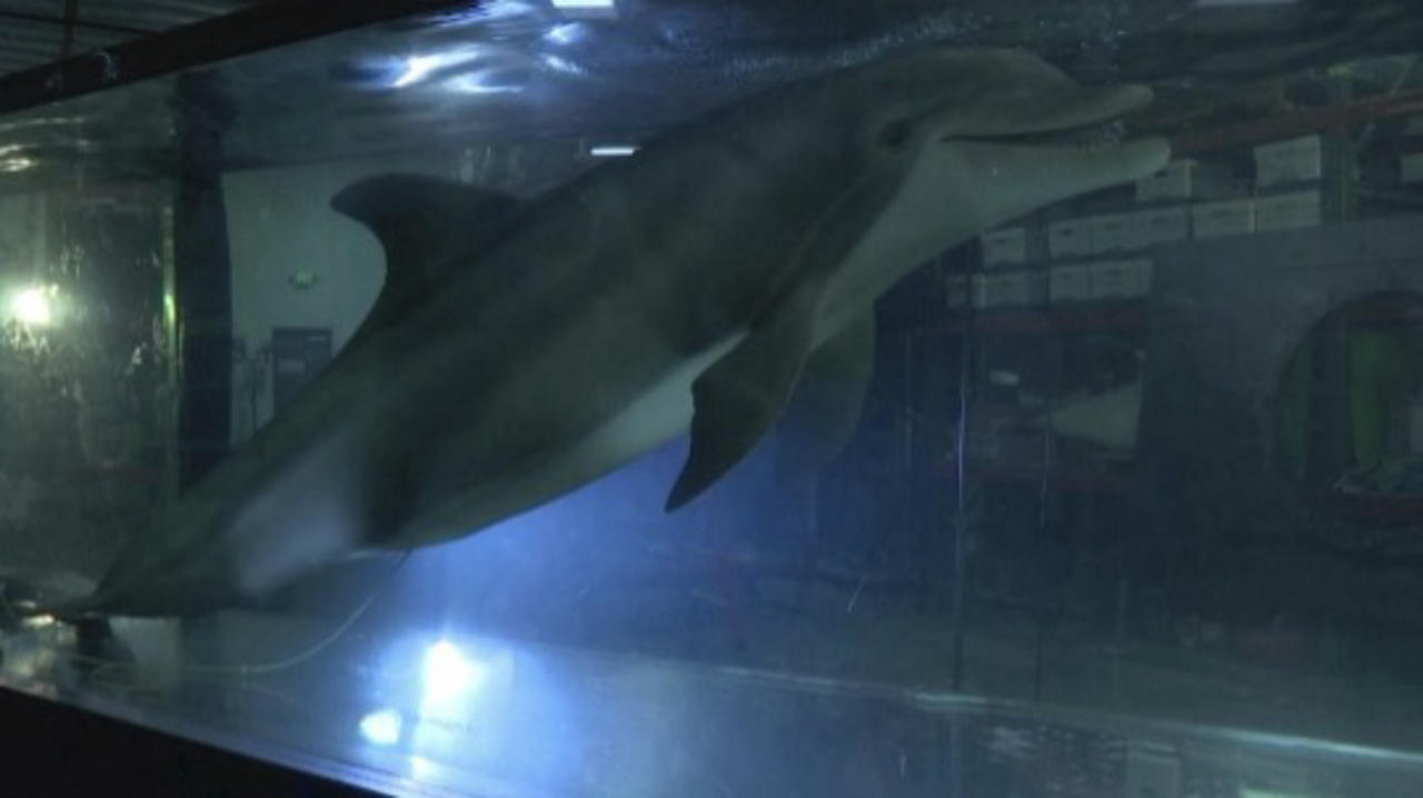 Is This the Future for Aquariums?