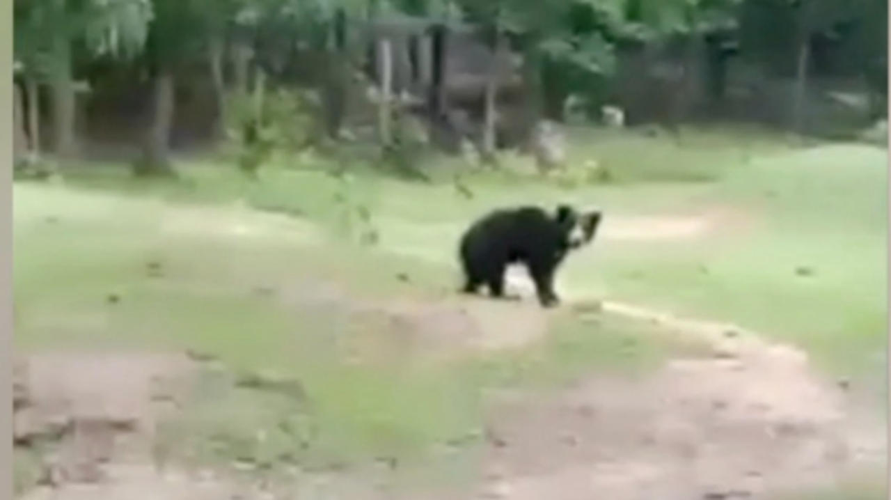 This Bear Family Had So Much Fun Playing With a Soccer Ball