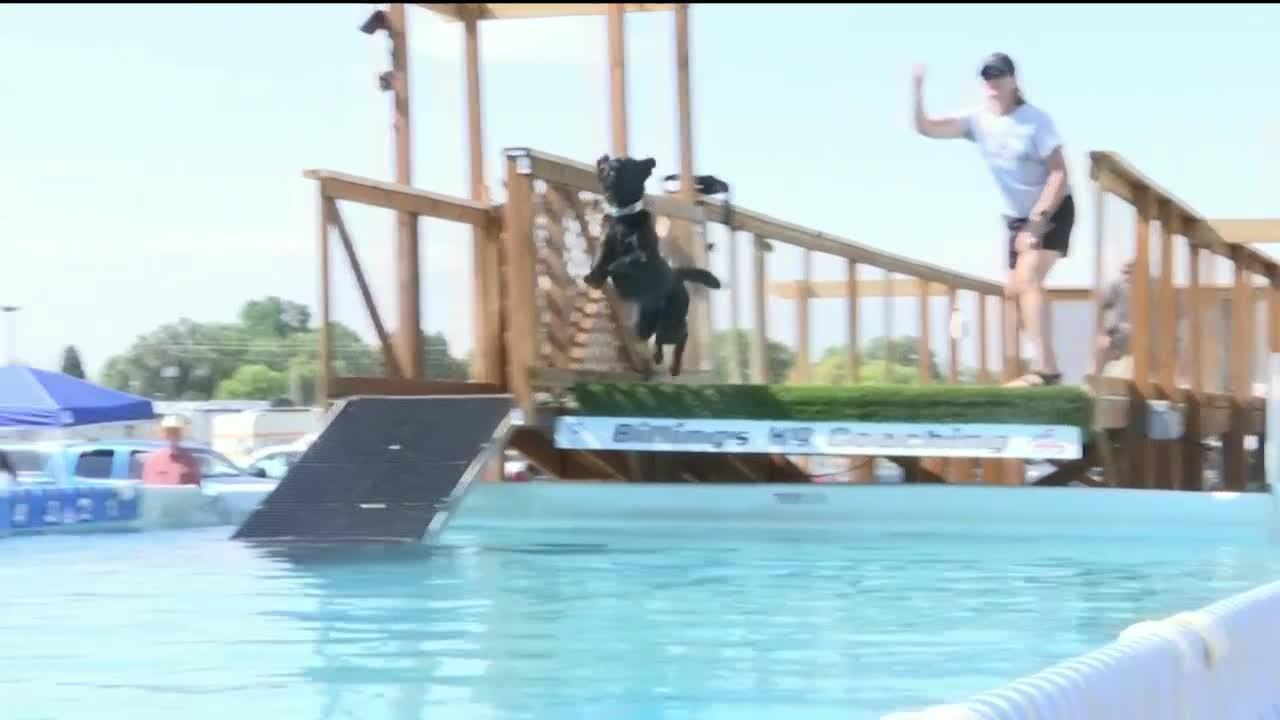 Dogs make a splash with dock diving