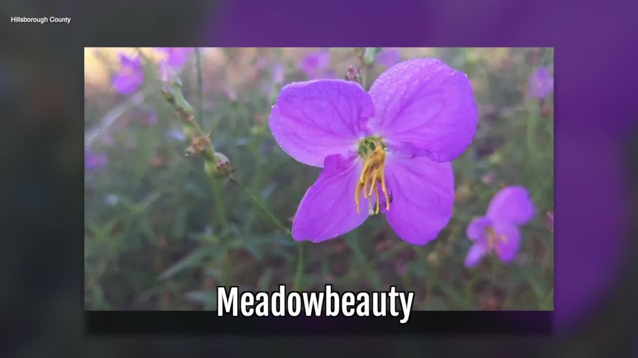 Meadowbeauty | Sarah's Walking Club Fall Scavenger Hunt