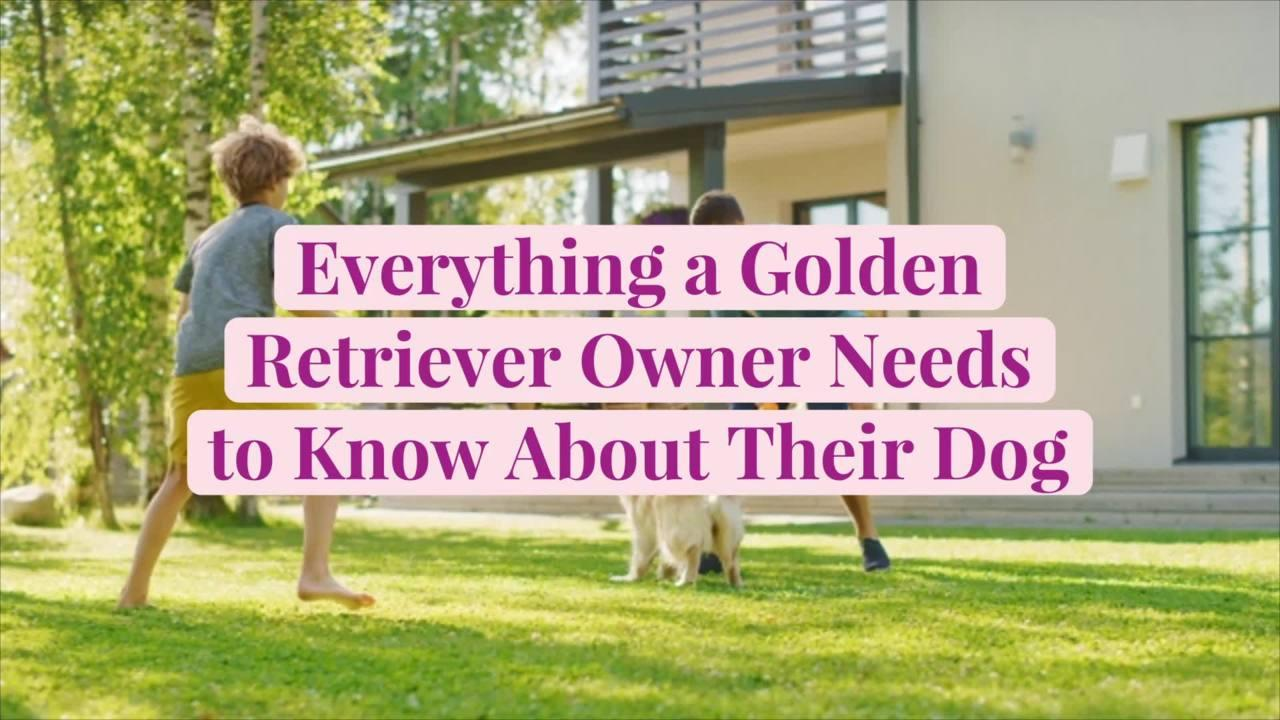 Everything a Golden Retriever Owner Needs to Know About Their Dog