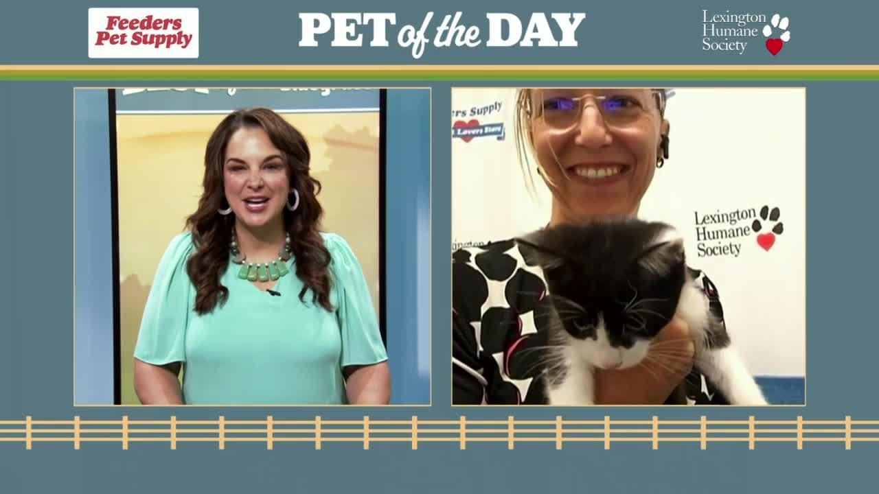 Pet of the Day: Louis