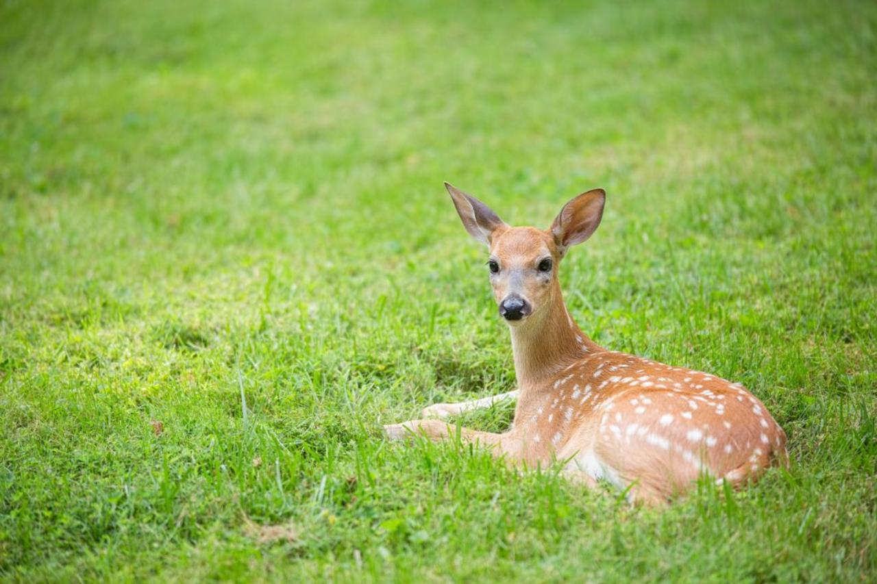 What to Do If You Find a Baby Animal Alone in Your Yard