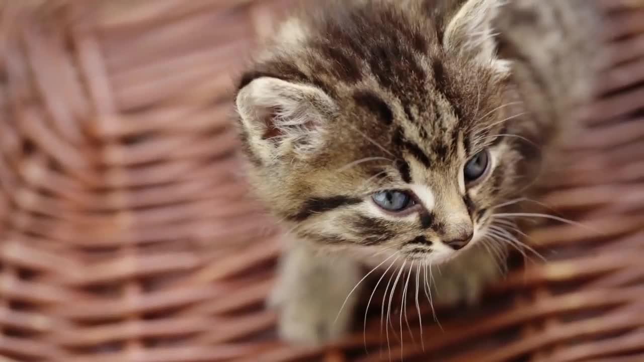 Pet Talk Tuesday – feline care