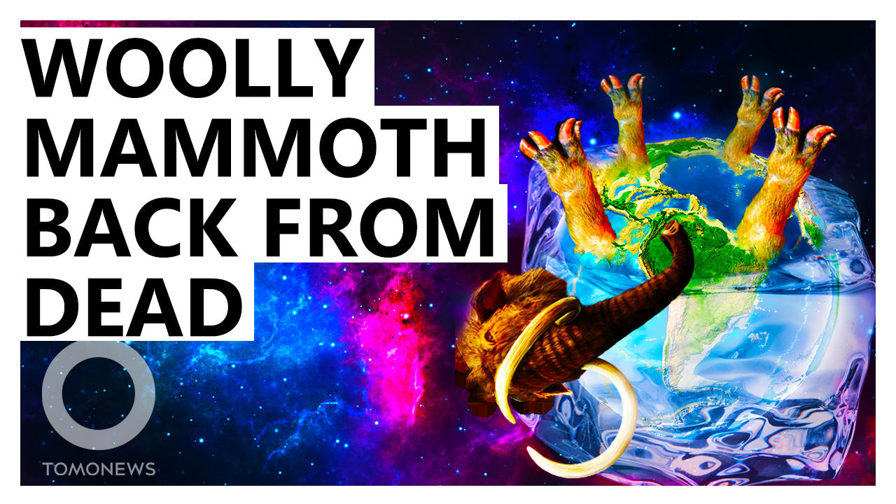 Scientists Resurrecting Woolly Mammoth to Fix Climate Change