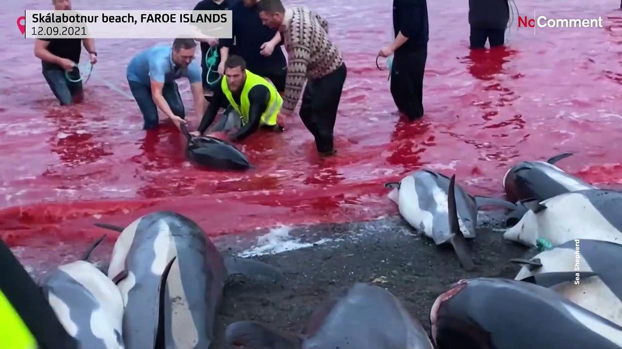 Slaughter of dolphins on Faroes could revive debate