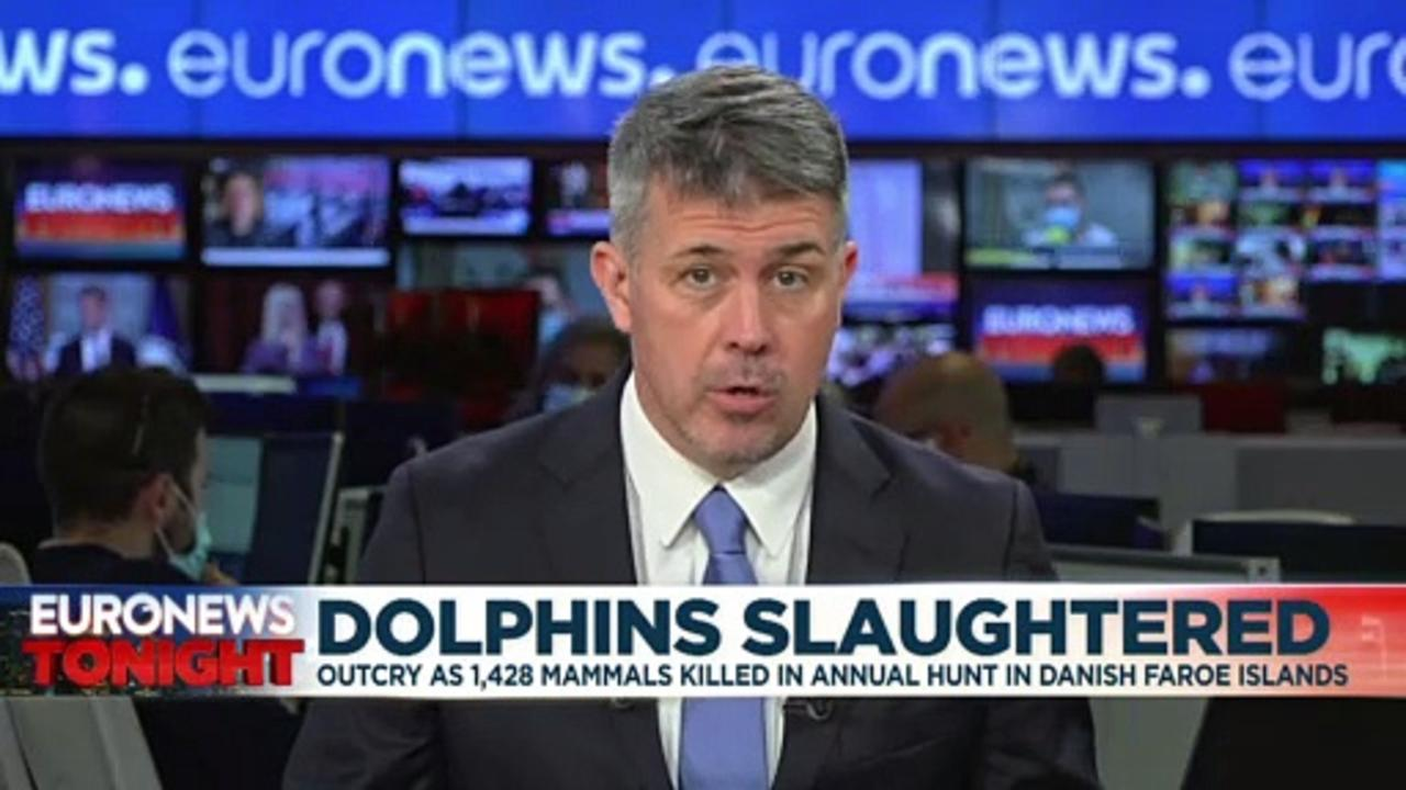 Tradition or torture? 1,500 dolphins slaughtered in 'unnecessary' Faroe Islands hunt
