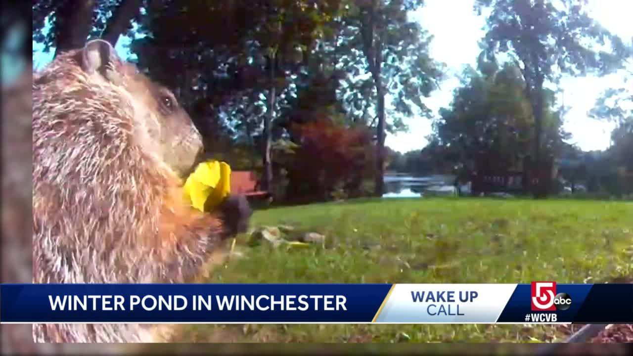 Wake Up Call from Winter Pond in Winchester