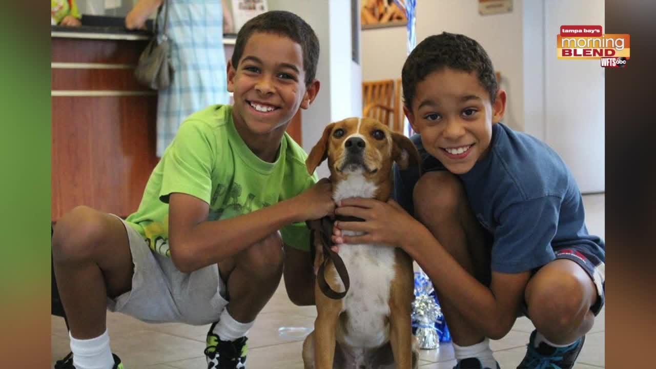 Pet Patrol SPCA Tampa Bay   Morning Blend