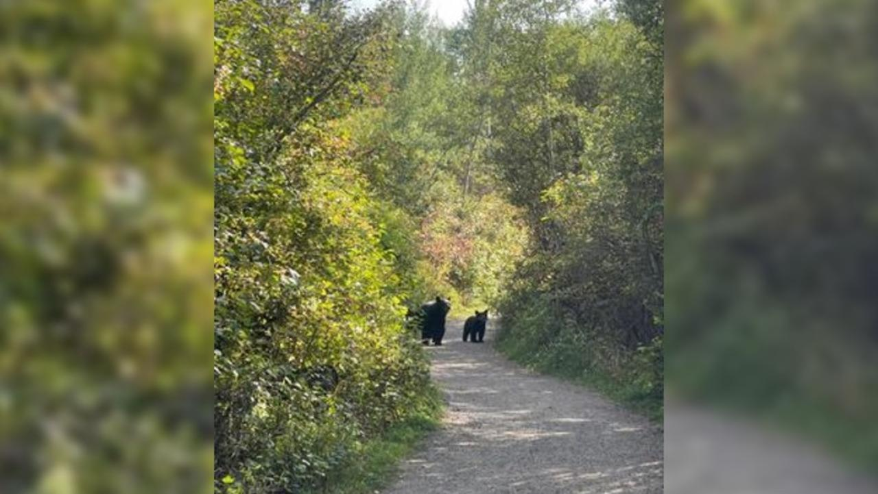 Bear sightings in Bozeman a good reminder to be 'bear aware'