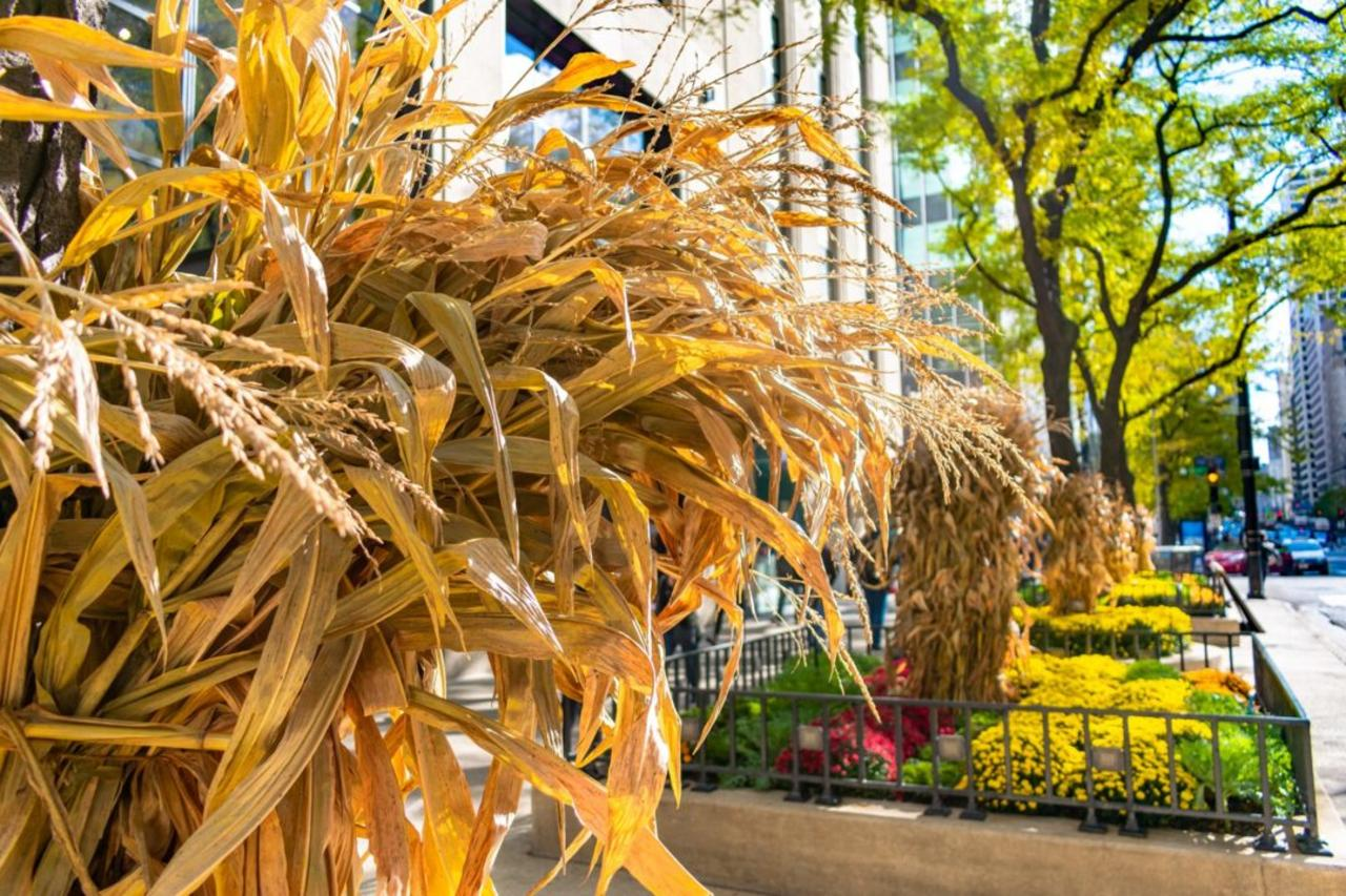 How to Dry Corn Stalks for Fall Décor