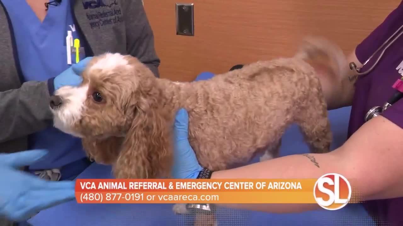 VCA Animal Referral & Emergency Center of Arizona offers veterinary neurosurgery