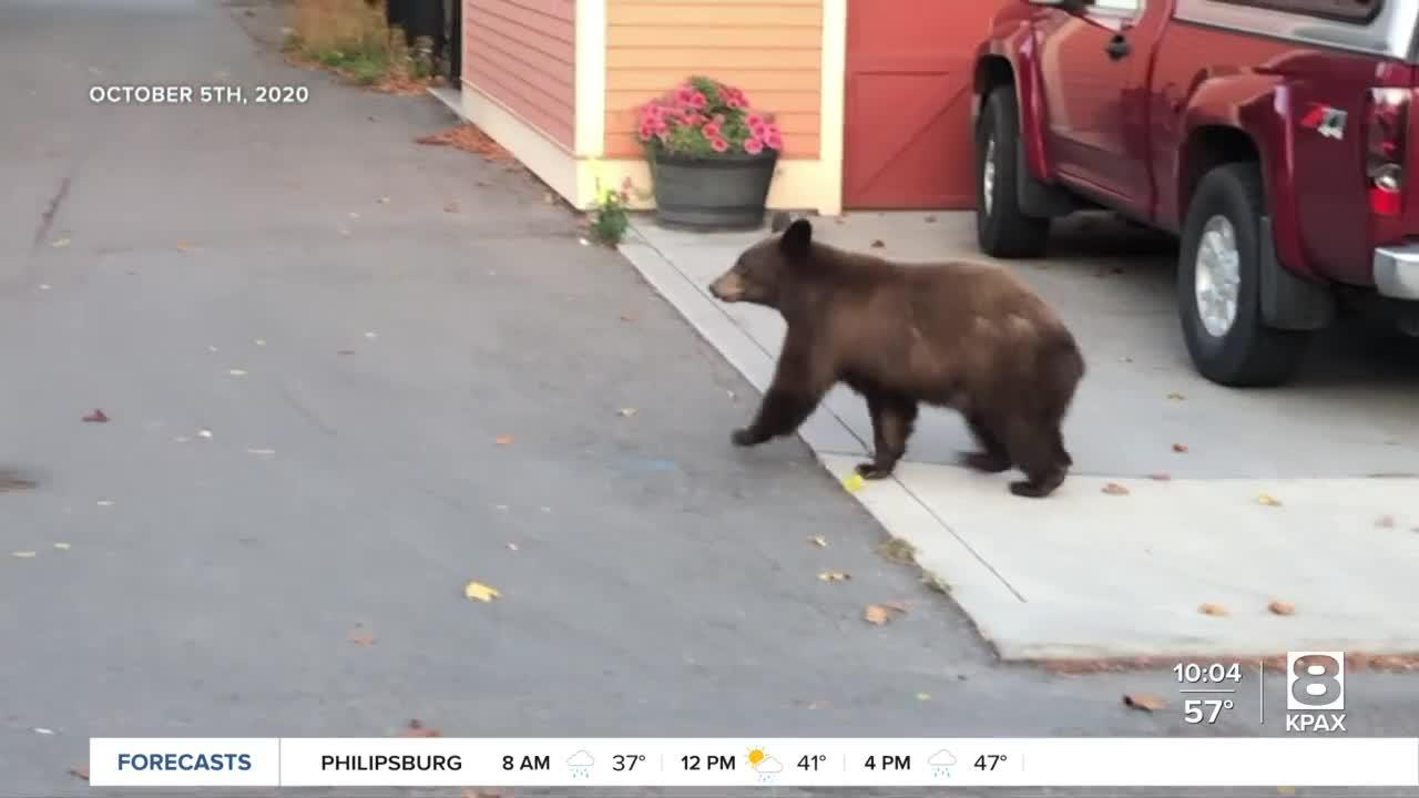More bears out and about as cooler weather settles in