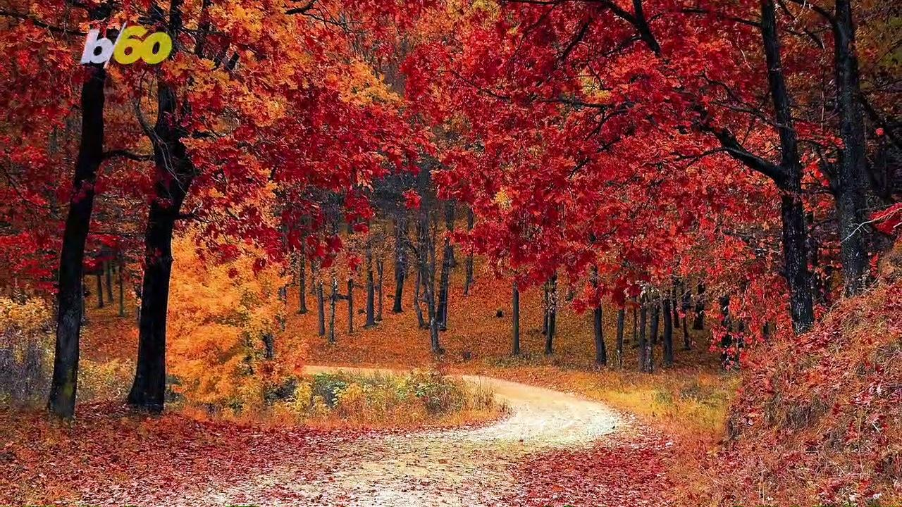 Here Are Some Fall Favorites That Also Boost Your Immune System