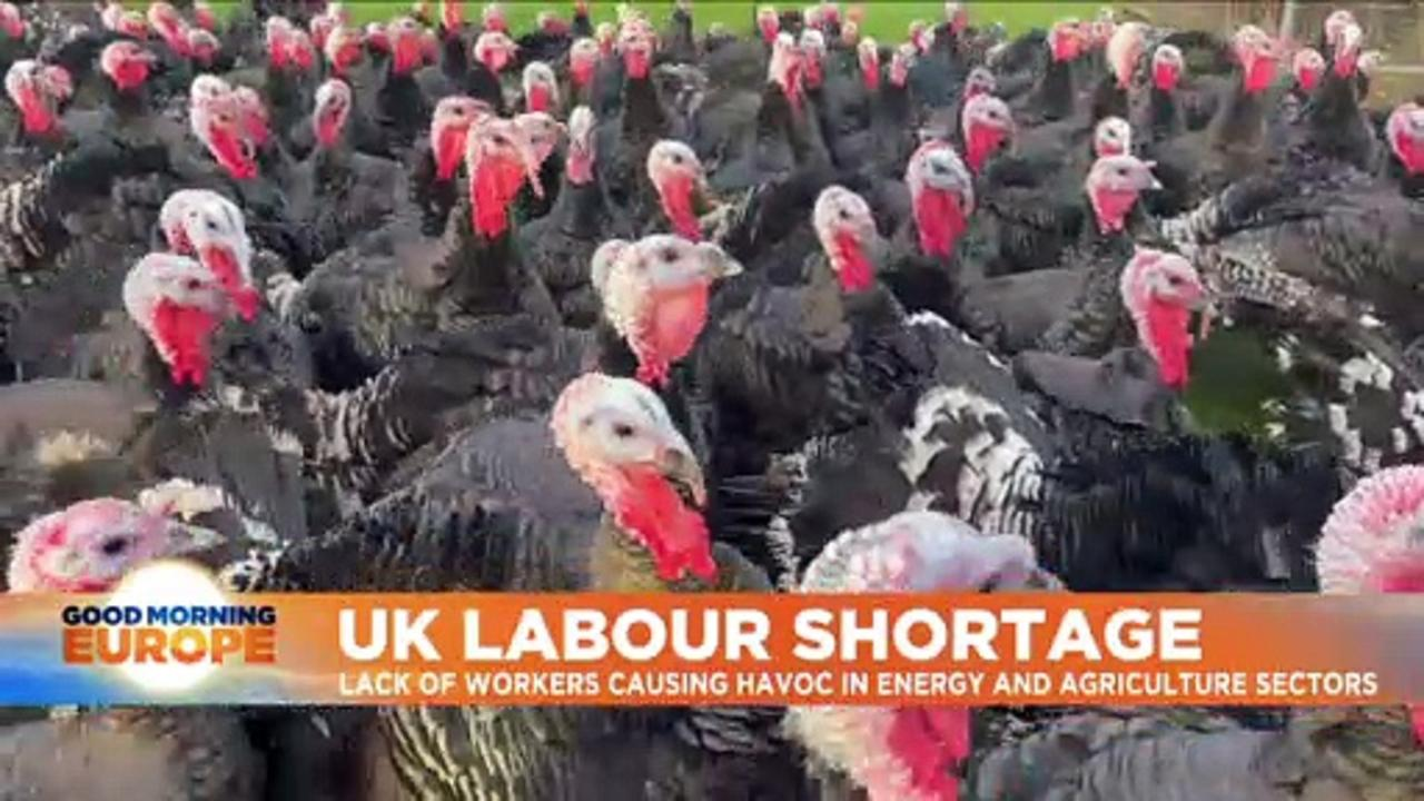 UK labour shortages: Will there be turkeys for Christmas in post-Brexit Britain?