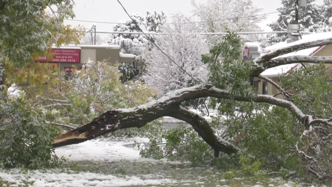 Downed tree creates hazard at Bozeman business