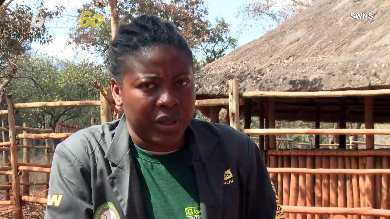 A Wild Life: Zambian Elephant Sanctuary Offers Care for Bereaved Baby Elephants