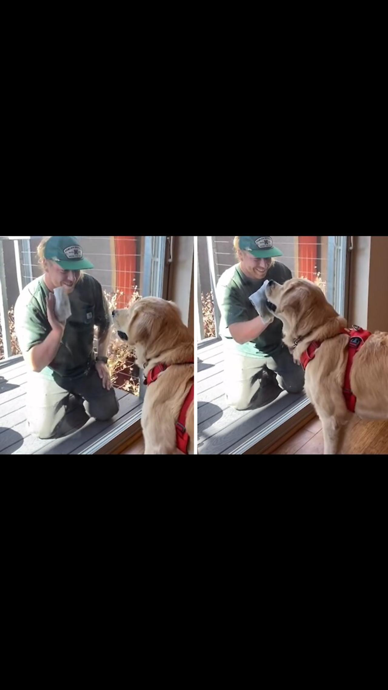 Hard-working doggy 'helps' owner clean the windows