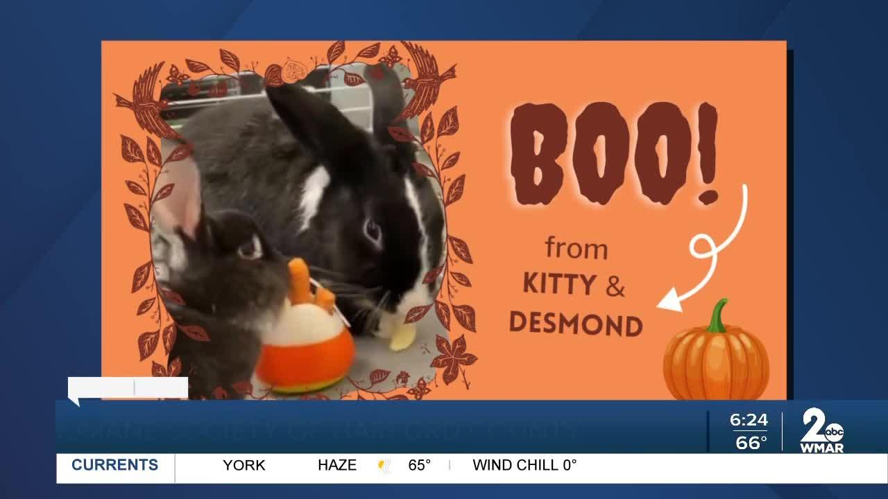 Kitty and Desmond the bunnies are up for adoption at the Humane Society of Harford County