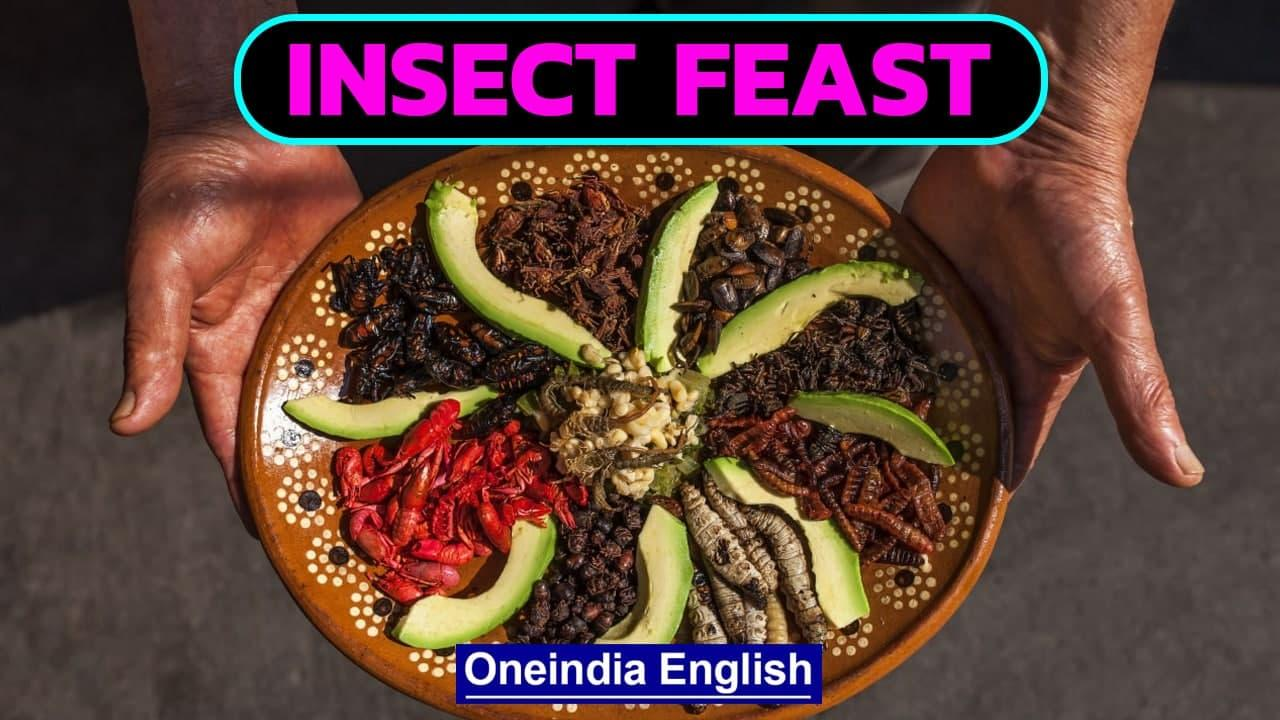 Meals from Nutritious Bugs in Zimbabwe   Cookbook an Attempt to make Edible Insects   Oneindia News