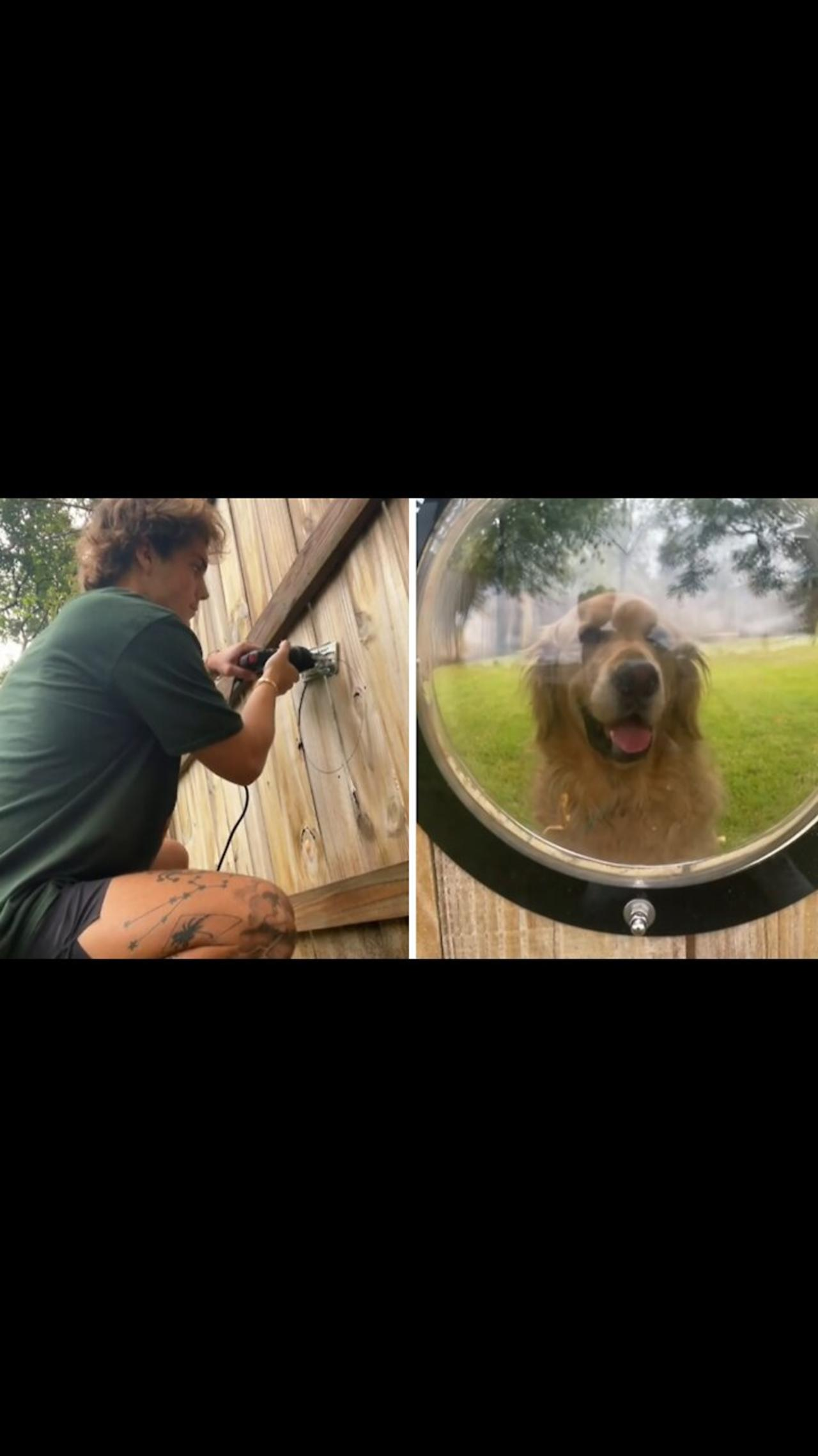 Guy puts window in fence for pup to see through