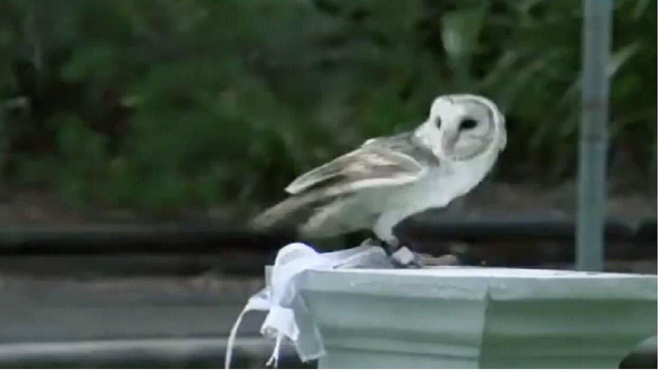 Owl flies down aisle to deliver wedding rings