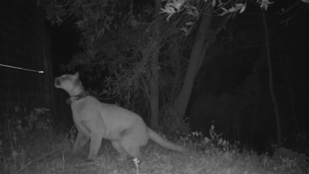 What is predator instinct?