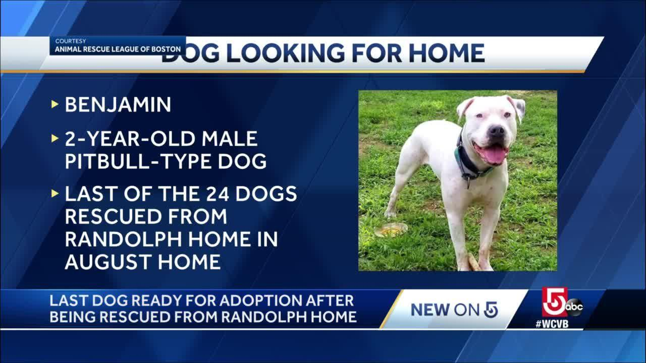 Rescued pup needs forever home