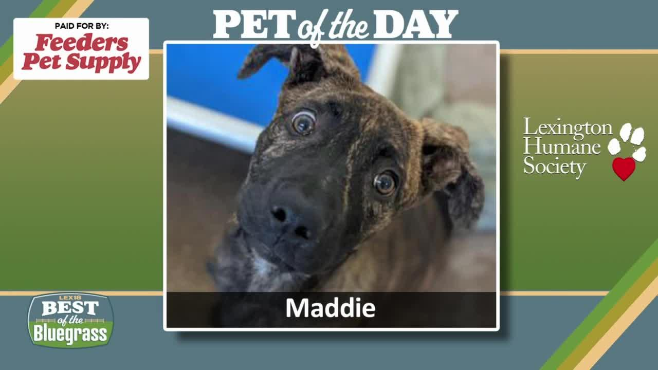 Pet of the Day: Maddie