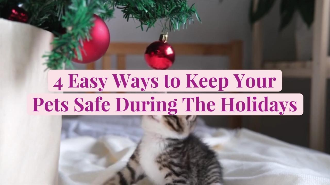4 Easy Ways to Keep Your Pets Safe During The Holidays
