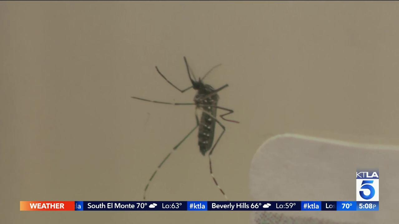 What is the Aedes mosquito that's spreading in California?