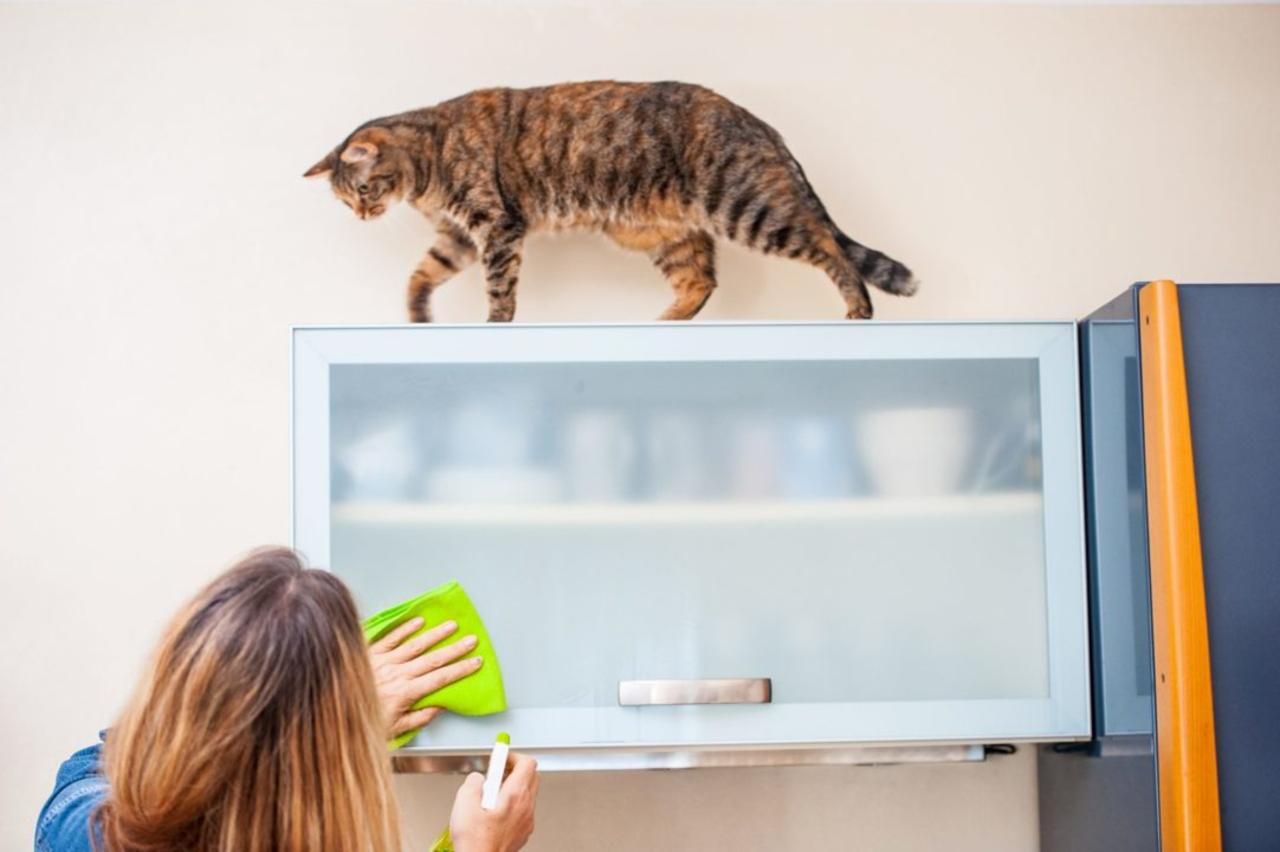 How to Reduce Cat Dander and Allergies at Home