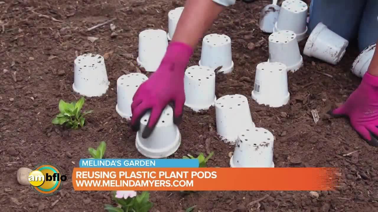 Melinda's Garden Moment – Re-using plastic plant pots