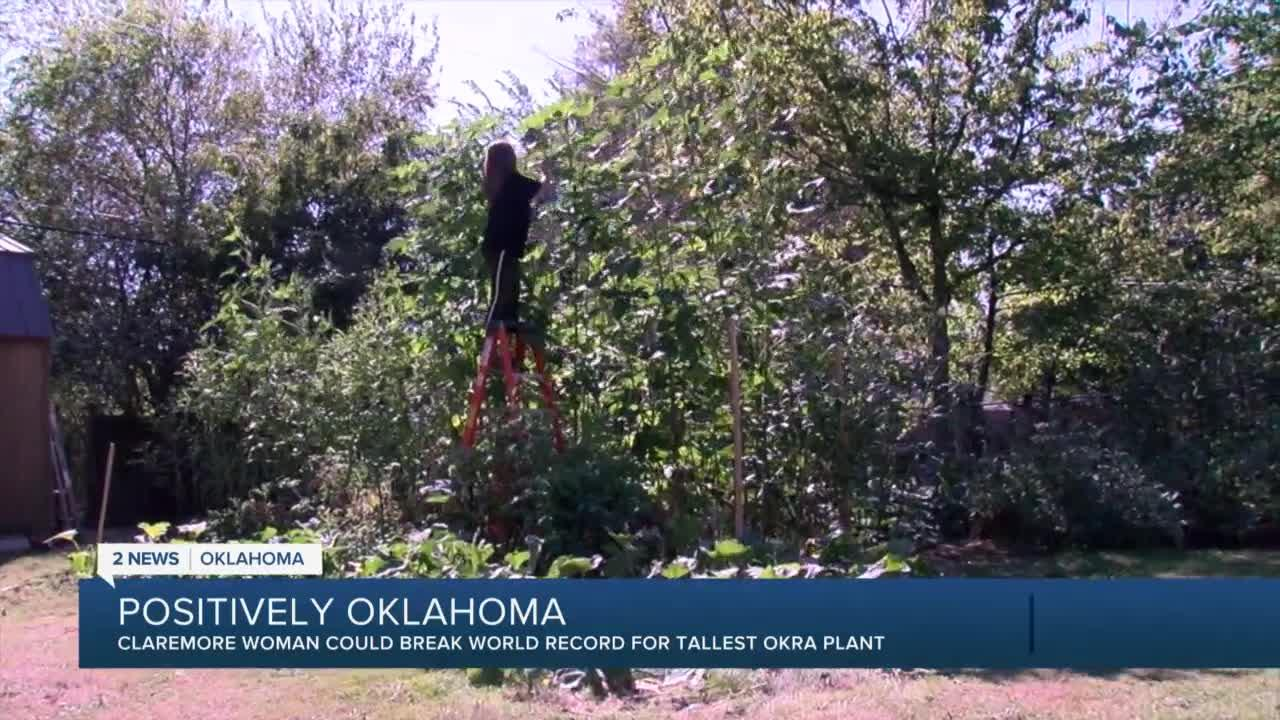 Claremore woman could break world record for tallest okra plant